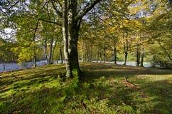 Der Wald Stockfoto