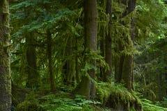 Der Wald Lizenzfreie Stockbilder