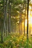 Der Wald Lizenzfreies Stockbild