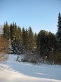 Der Wald Stockfotos