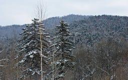 Der Wald Lizenzfreie Stockfotografie