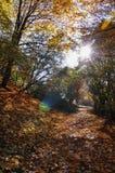 Der Wald Stockfotografie
