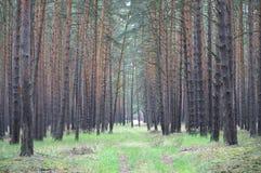 Der Wald Stockbild
