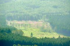 Der Wald auf dem Abhang Stockbild
