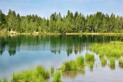 Der Wald auf dem Ufer von See Stockfoto
