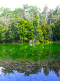 Der Wald bei Krabi, Thailand im Reflexionsthema Lizenzfreie Stockbilder