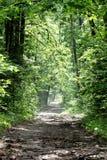 Der Wald der Straße im Frühjahr Lizenzfreie Stockbilder