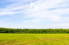 Der Wald des Feldes und des Himmels Stockfotos