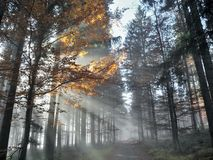 Der Wald des Lichtes morgens Stockfotografie