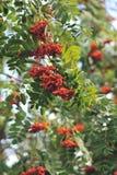 Der Wald gießt mit bunten Beeren aus Lizenzfreies Stockfoto