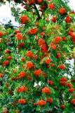 Der Wald gießt mit bunten Beeren aus Lizenzfreie Stockfotos
