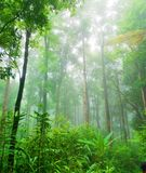 Der Wald (Holz) Lizenzfreies Stockbild