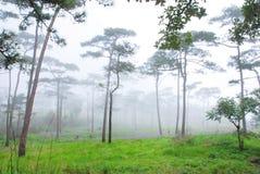Der Wald (Holz) Stockbilder