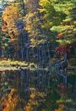 Der Wald im Fall Lizenzfreie Stockbilder
