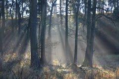 Der Wald im Herbst Stockfotos