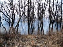 Der Wald im Rauche Stockbild