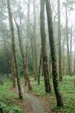 Der Wald mit Nebel Lizenzfreies Stockbild