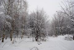 Der Wald nach Schneefälle, Spuren im Wald Lizenzfreies Stockbild