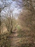 Der Wald nahe der Stadt Stockfotos