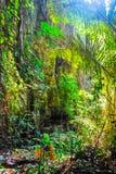 Der Wald in der Nationalparklandschaft Sri SAT Cha Na Lai, Sukhothai, Thailand Lizenzfreie Stockfotos