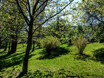 Der Wald Neamt Stockfotografie