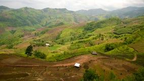 Der Wald in Nord-Thailand Stockfotos