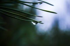 Der Wald reflektierte sich in einem Wassertropfen auf einer gezierten Nadel Lizenzfreie Stockfotos