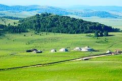 Der Wald und das Gers auf der grünen Sommersteppe Lizenzfreie Stockfotografie
