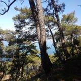 Der Wald und das Meer Stockfotografie