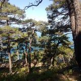 Der Wald und das Meer Lizenzfreie Stockfotos