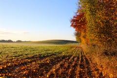 Der Wald und der Hügel Lizenzfreies Stockfoto