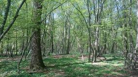 Der Wald voller baeume Stock Afbeeldingen