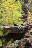 Der Wald wächst auf Steinen lizenzfreie stockfotos