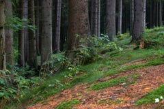 Der Waldfußboden Stockfoto