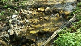 Der Waldnebenfluß fließt unten stock video