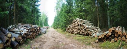 Der Waldweg Lizenzfreie Stockfotografie