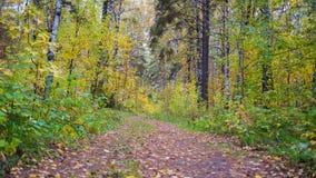Der Waldweg, der durch schönen bunten Herbstwaldherbst überschreitet Lizenzfreies Stockfoto