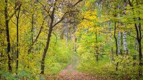 Der Waldweg, der durch schönen bunten Herbstwaldherbst überschreitet Lizenzfreie Stockfotografie