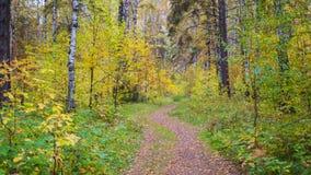 Der Waldweg, der durch schönen bunten Herbstwaldherbst überschreitet Stockfotografie