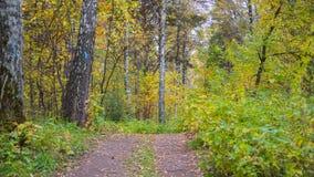 Der Waldweg, der durch schönen bunten Herbstwaldherbst überschreitet Ein schöner szenischer Platz Stockfotos