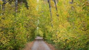 Der Waldweg, der durch schönen bunten Herbstwaldherbst überschreitet Ein schöner szenischer Platz Lizenzfreie Stockfotos