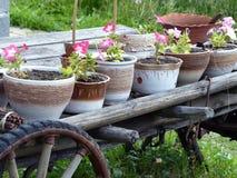 Der Warenkorb mit Blumen Von den Warenkörben hergestellt ein Blumenbeet mit Blumen Lizenzfreie Stockbilder