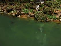Der Wasserfall fließt in den grünen See Stockfoto