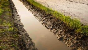 Der Wasserlauf des Reisfeldes Stockfoto