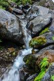 Der Wasserstrom im Dschungel Lizenzfreie Stockfotografie