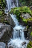 Der Wasserstrom im Dschungel Stockfotos