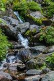Der Wasserstrom im Dschungel Lizenzfreies Stockfoto