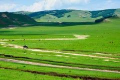 Der Weg auf dem Grasland Stockbild