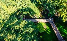 Der Weg in den Baumkronen Stockfotos