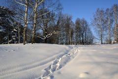 Der Weg der Bahnen in einem schneebedeckten Wald Stockfotografie